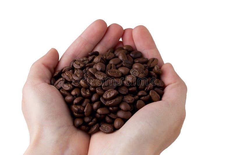 Los granos de café en manos fotografía de archivo libre de regalías
