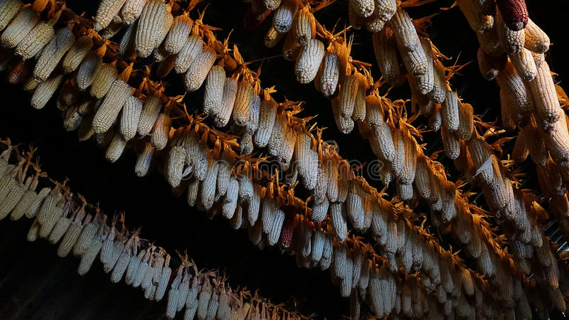 Los granos secados se cuelgan en el tejado de la casa simple de Hmong fotos de archivo