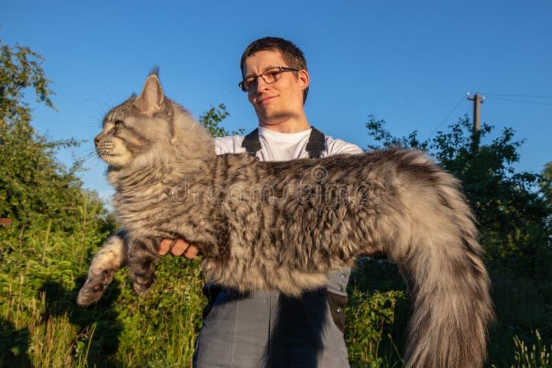 Los guardapolvos un hombre que lleva los vidrios y está sosteniendo un gato enorme, gris de Maine Coon fotografía de archivo libre de regalías