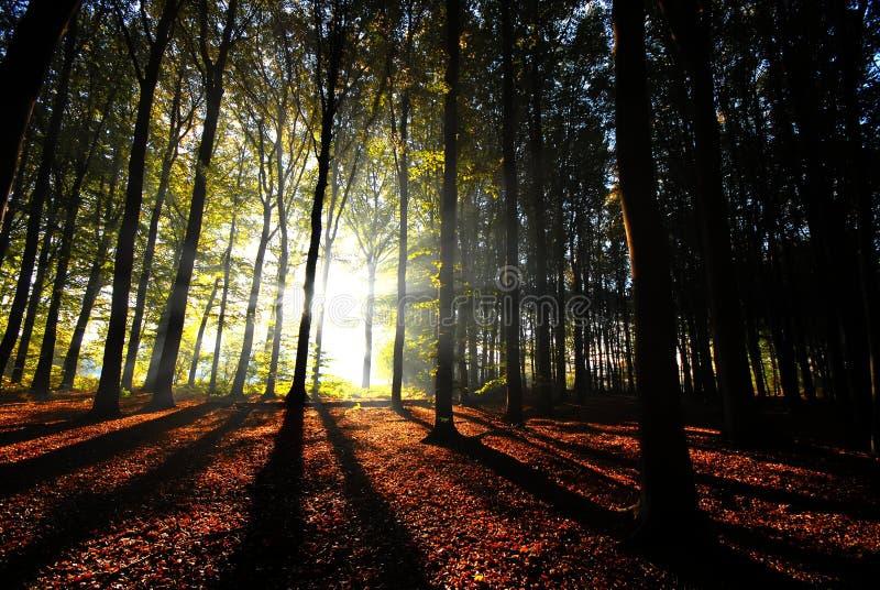 Los haces de luz vierten a través de los árboles imagenes de archivo