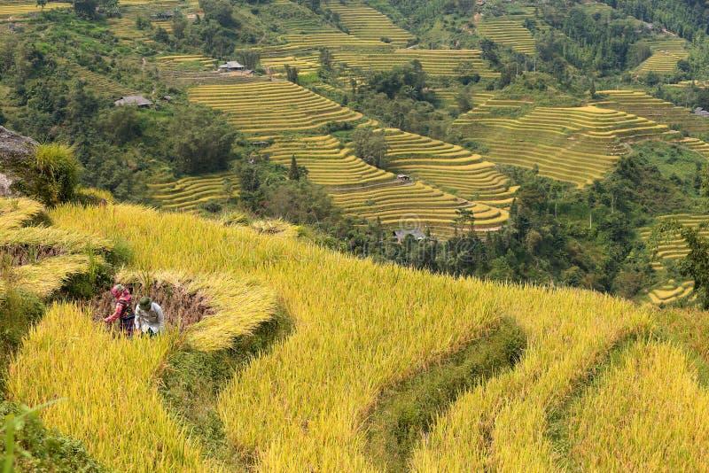 Los hombres y las mujeres cortaron los campos de la terraza del arroz más hermosos de Ha Giang fotos de archivo libres de regalías