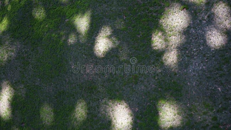 Los hongos emparedan debajo de la sombra imagen de archivo libre de regalías