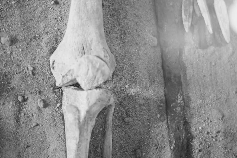 Los huesos de la mano humana fotografía de archivo