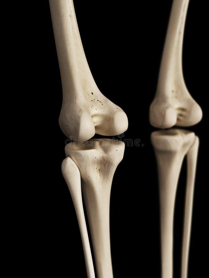 Lujoso Anatomía Detallada De Rodilla Imagen - Imágenes de Anatomía ...