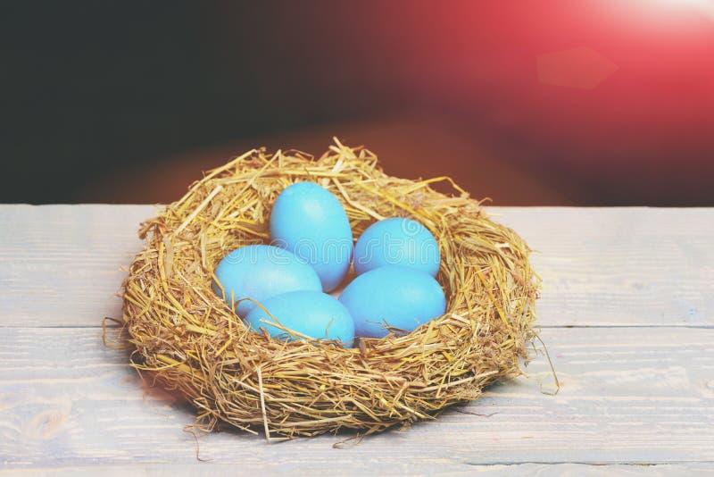 Los huevos azules pintados de pascua en pájaro jerarquizan en fondo negro fotos de archivo libres de regalías