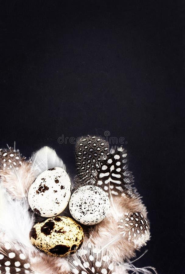 Los huevos de codornices con las plumas blancas en negro del vintage rasguñaron el backgr foto de archivo
