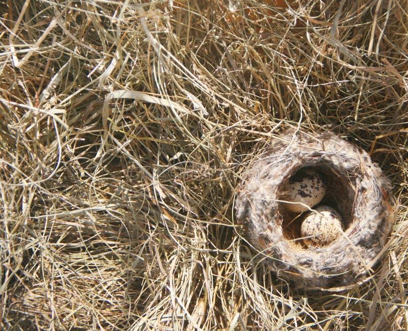 Los huevos de los pequeños pájaros en la jerarquía en la hierba fotos de archivo libres de regalías