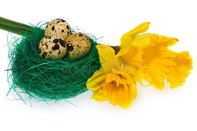 Los huevos de Pascua en pájaro verde jerarquizan con los narcisos de la flor fotografía de archivo