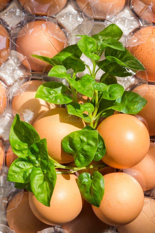 Los huevos son altos en la proteína para el desayuno, fácil ser beneficiosos al cuerpo foto de archivo libre de regalías