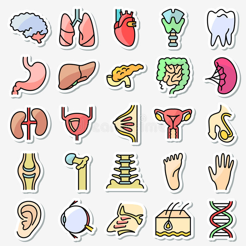 Los iconos humanos de la anatomía y de los órganos fijaron fino colorido del vector simplemente ilustración del vector