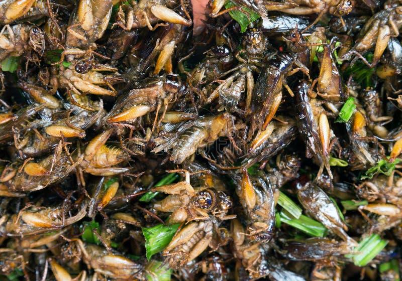 Los insectos extraños frieron comida del gusto de la comida la buena fotografía de archivo