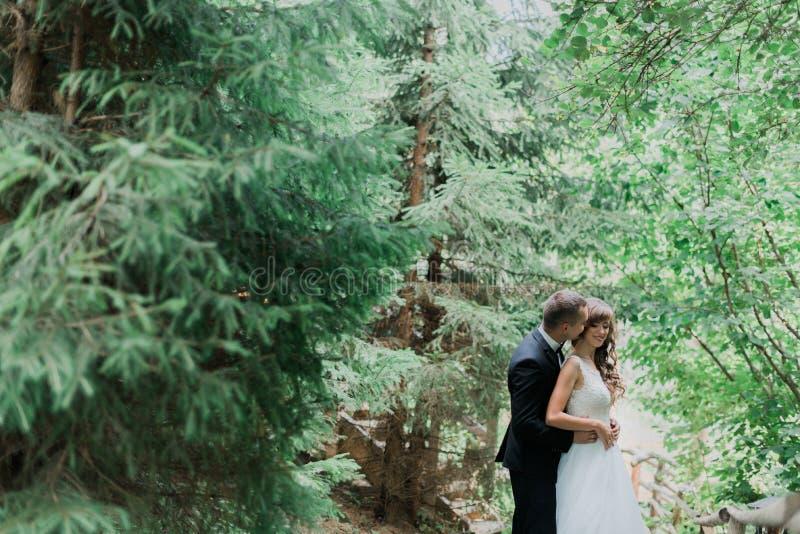 Los jóvenes hermosos casados juntan la situación que abraza en el bosque fotografía de archivo libre de regalías