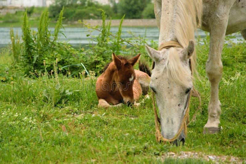 Los jóvenes paren con su mamá que pasta en el prado fotos de archivo