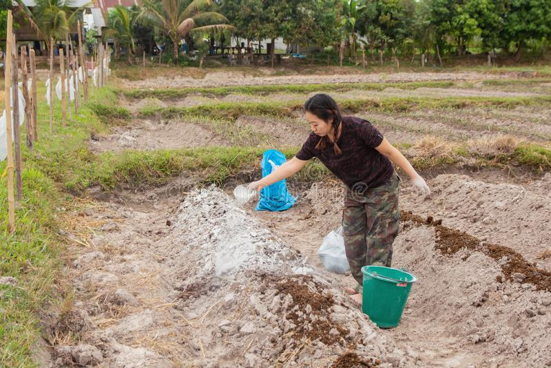 Los jardineros de la mujer pusieron el hidróxido de la cal o de calcio en el suelo para neutralizar la acidez del suelo fotos de archivo libres de regalías