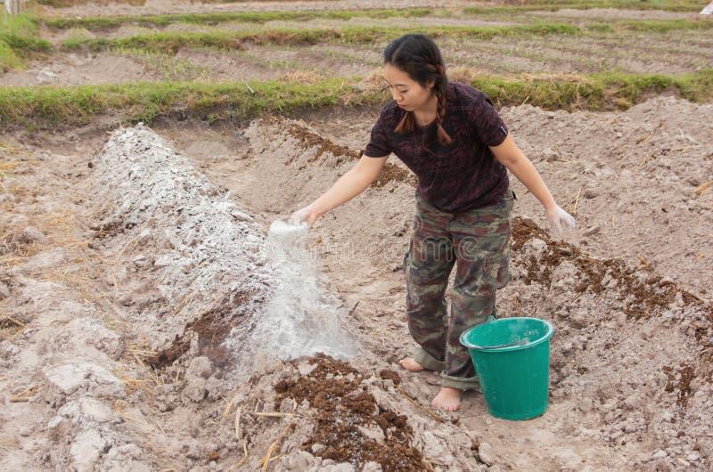 Los jardineros de la mujer pusieron el hidróxido de la cal o de calcio en el suelo para neutralizar la acidez del suelo foto de archivo