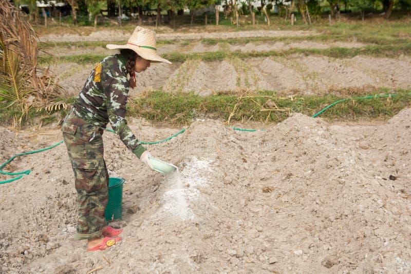 Los jardineros de la mujer pusieron el hidróxido de la cal o de calcio en el suelo para neutralizar la acidez del suelo fotos de archivo