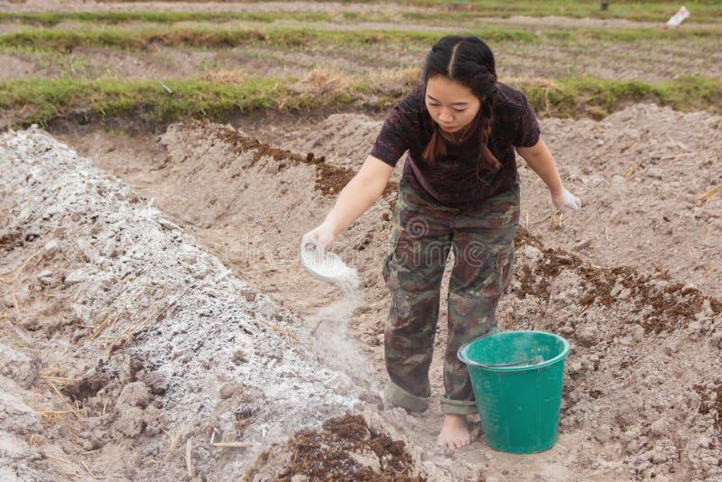 Los jardineros de la mujer pusieron el hidróxido de la cal o de calcio en el suelo para neutralizar la acidez del suelo imagenes de archivo