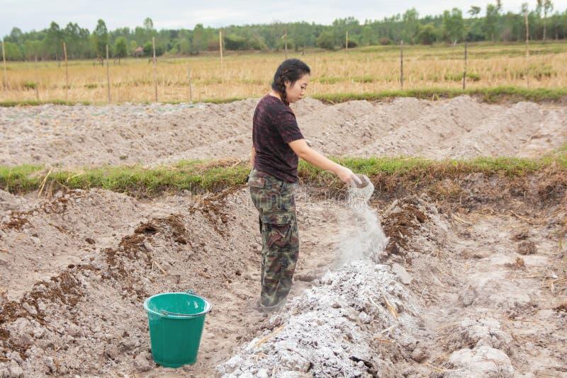 Los jardineros de la mujer pusieron el hidróxido de la cal o de calcio en el suelo para neutralizar la acidez del suelo imagen de archivo