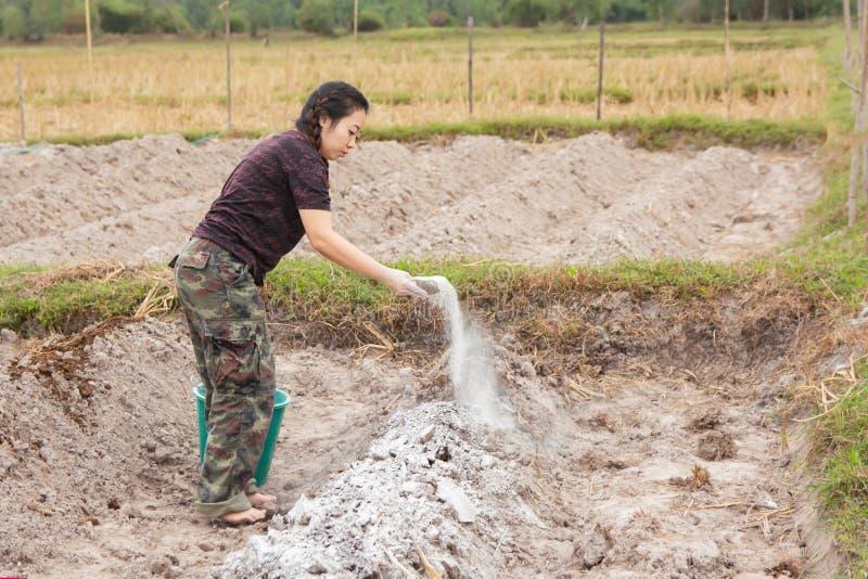 Los jardineros de la mujer pusieron el hidróxido de la cal o de calcio en el suelo para neutralizar la acidez del suelo fotografía de archivo libre de regalías