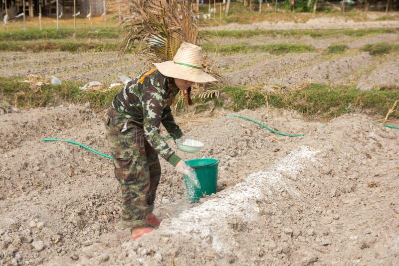 Los jardineros de la mujer pusieron el hidróxido de la cal o de calcio en el suelo para neutralizar la acidez del suelo fotografía de archivo