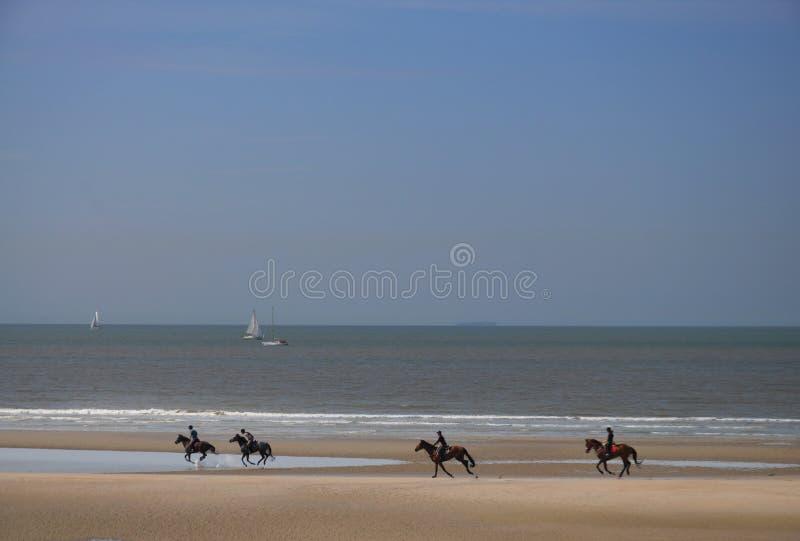 Los jinetes que galopan a lo largo de la playa fotografía de archivo
