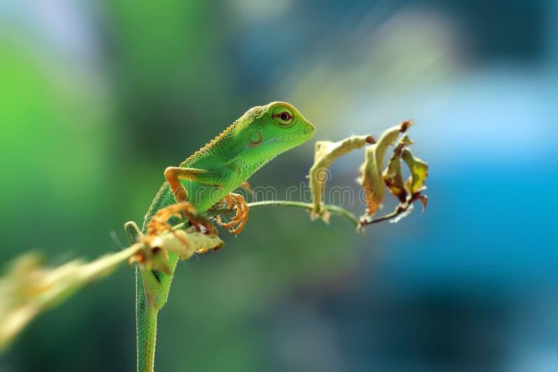 Los lagartos imágenes de archivo libres de regalías
