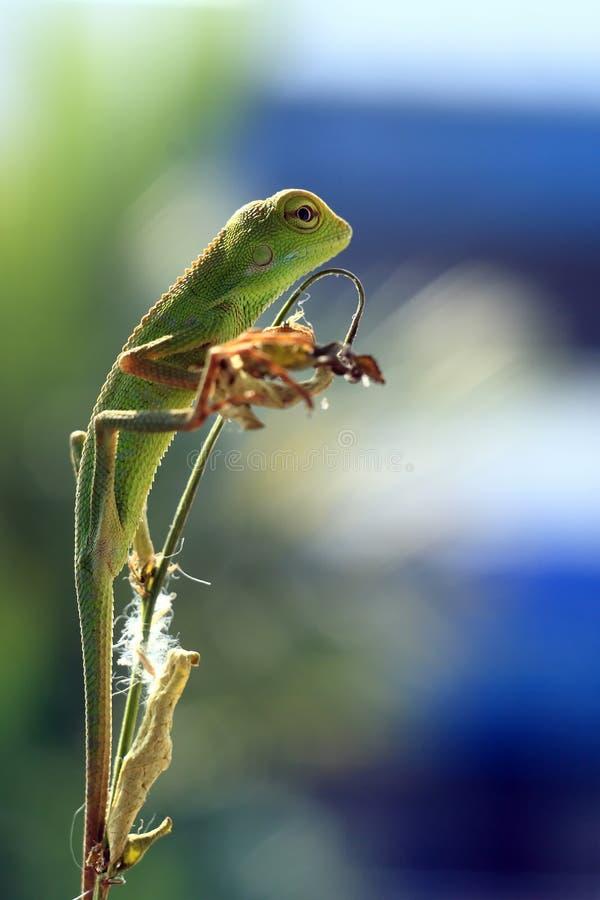 Los lagartos Hang Out fotografía de archivo libre de regalías