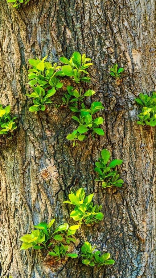 Los lanzamientos verdes crecen en un ?rbol, imagenes de archivo