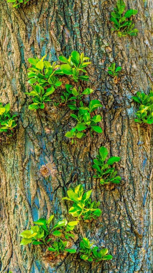 Los lanzamientos verdes crecen en un ?rbol, foto de archivo libre de regalías