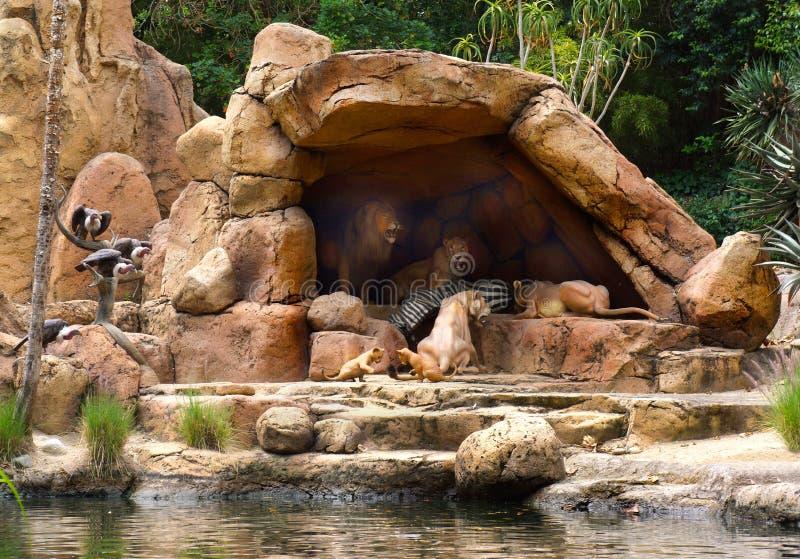 Los leones de la travesía de la selva de Disney festejan en cebra mientras que juego de los cachorros foto de archivo libre de regalías