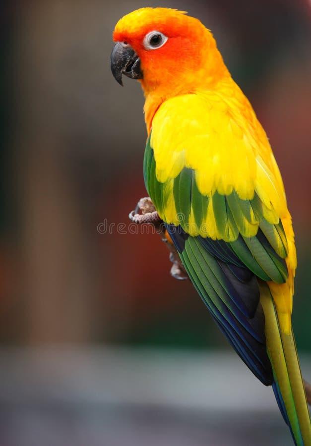 Los loros multicolores brillantes se sientan en una rama imágenes de archivo libres de regalías