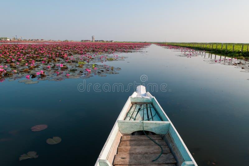 Los lotos rojos florecen en la llamada Thale noi del pequeño lago foto de archivo