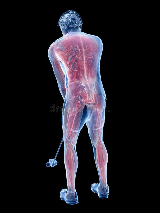 Los músculos de un jugador de golf stock de ilustración