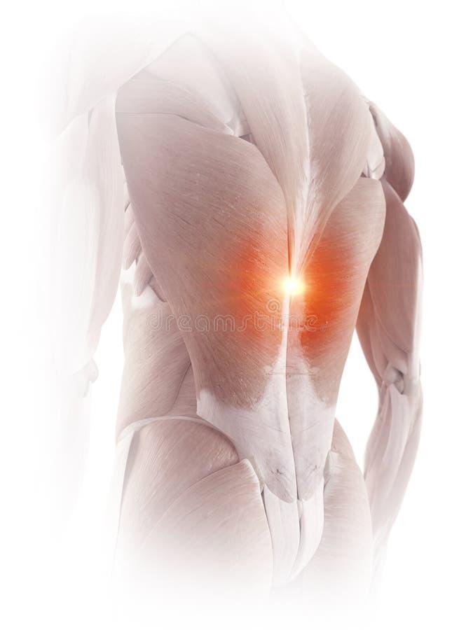 Los músculos traseros que muestran dolor libre illustration