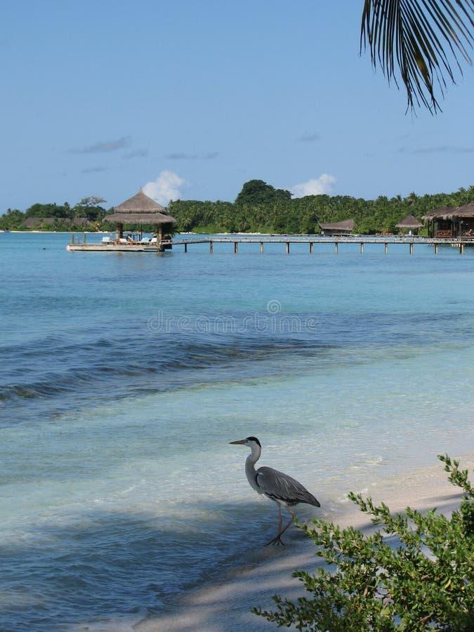 Los Maldives fotografía de archivo
