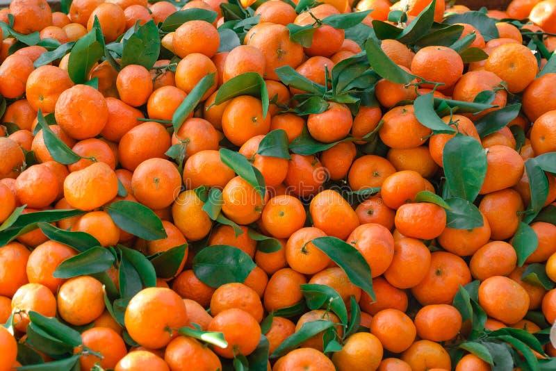 Los mandarines con las hojas verdes dispersaron capa densa fotografía de archivo libre de regalías
