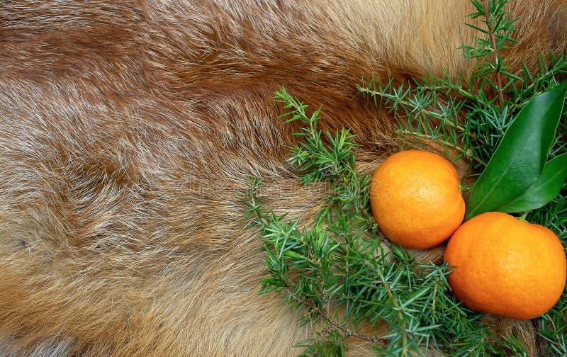 Los mandarines en el fondo de la picea de la piel de Fox ramifican las vacaciones de invierno del Año Nuevo fotografía de archivo
