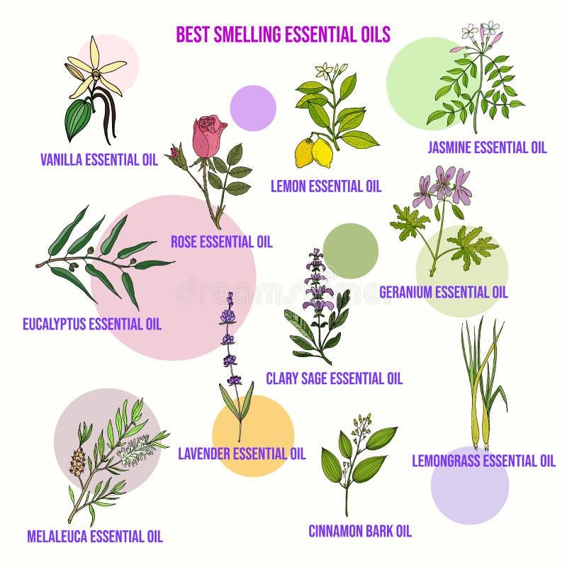 Los mejores aceites esenciales que huelen ilustración del vector