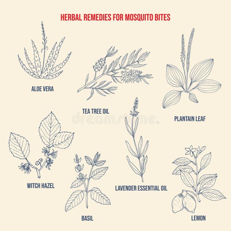 Los mejores remedios herbarios para las mordeduras de mosquito libre illustration