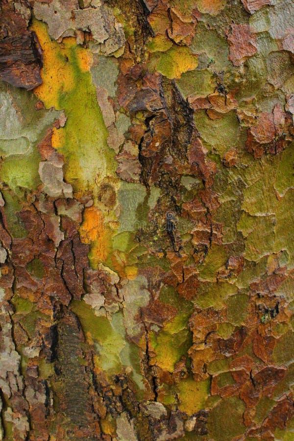 Los militares naturales camuflan en árbol fotografía de archivo libre de regalías