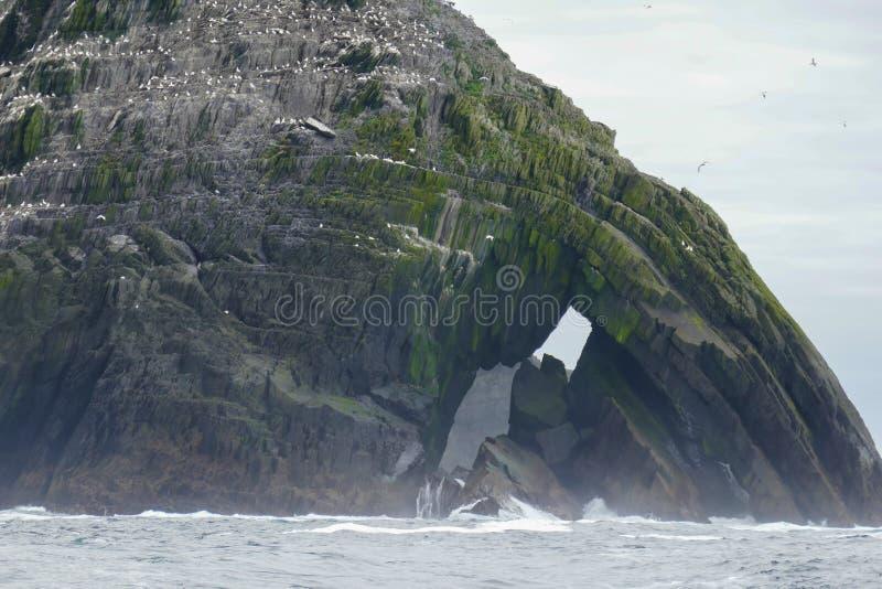 Los millares de aves marinas hacen poco hogar de la isla de Skellig, incluyendo la colonia septentrional más grande del gannet de fotos de archivo
