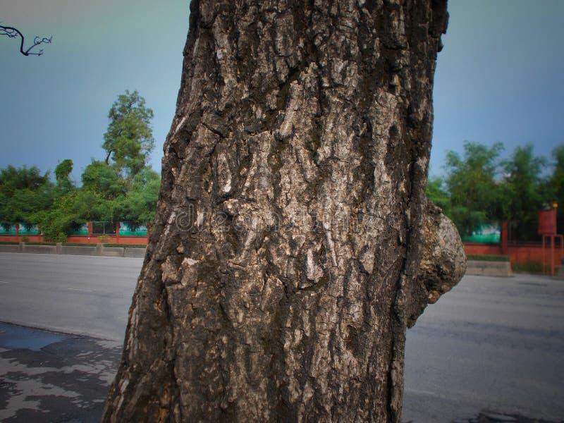 Los modelos de provienen árboles grandes fotografía de archivo