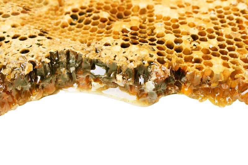 Los modelos del panal texturizan con la opinión superior del goteo de la miel aislados en el fondo blanco con la trayectoria de r fotografía de archivo
