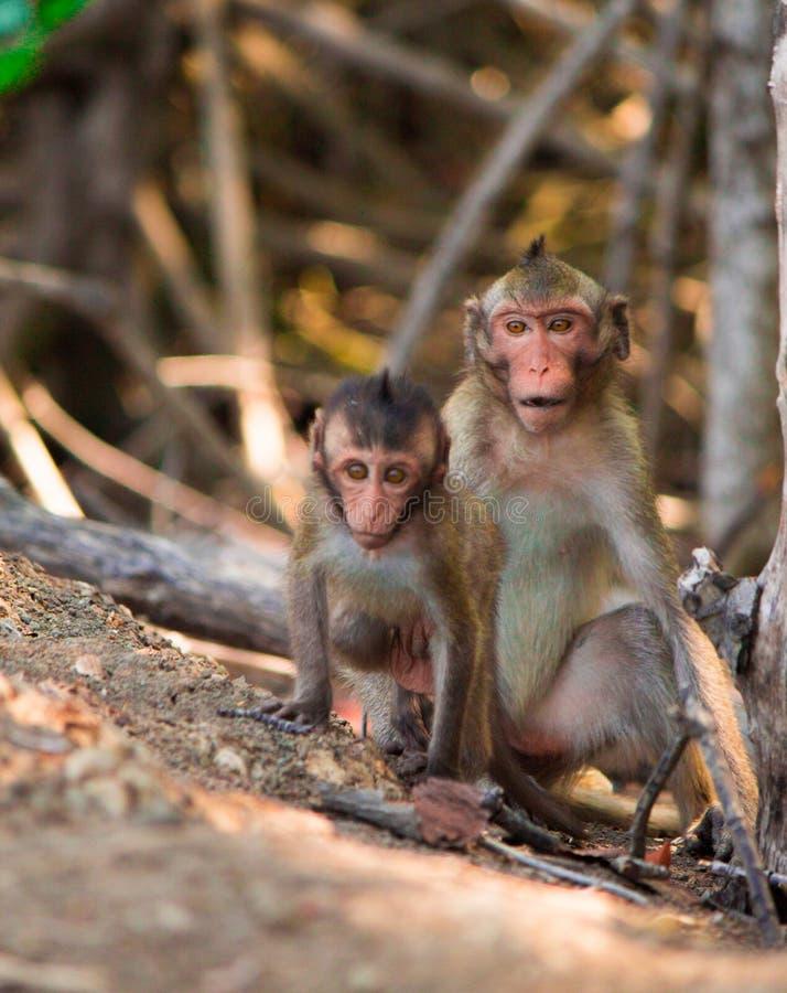 Los monos suben los árboles/mono/familia del mono foto de archivo