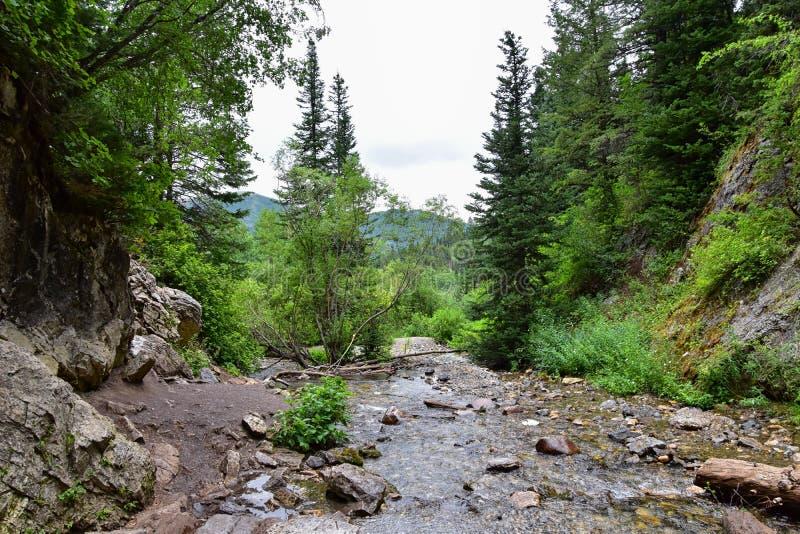 Los Mountain View de la cascada y de la corriente del río de pistas de senderismo al buñuelo bajan en barranco grande del Cottonw fotos de archivo libres de regalías