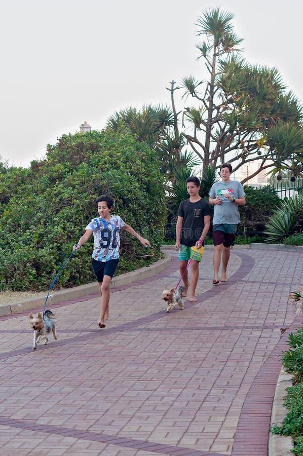 Los muchachos jovenes que caminan sus pequeños perros a lo largo de la 'promenade' en Umhlanga oscilan la playa imagen de archivo libre de regalías