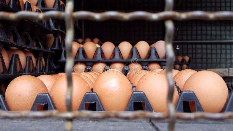 los muchos paneles del plástico con los huevos frescos en el extremo de la furgoneta imágenes de archivo libres de regalías