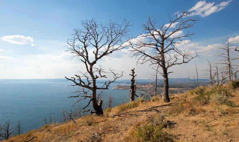 Los muertos quemaron árboles en la opinión de la mota del lago sobre el lago Yellowstone en el parque nacional de Yellowstone en  fotografía de archivo libre de regalías