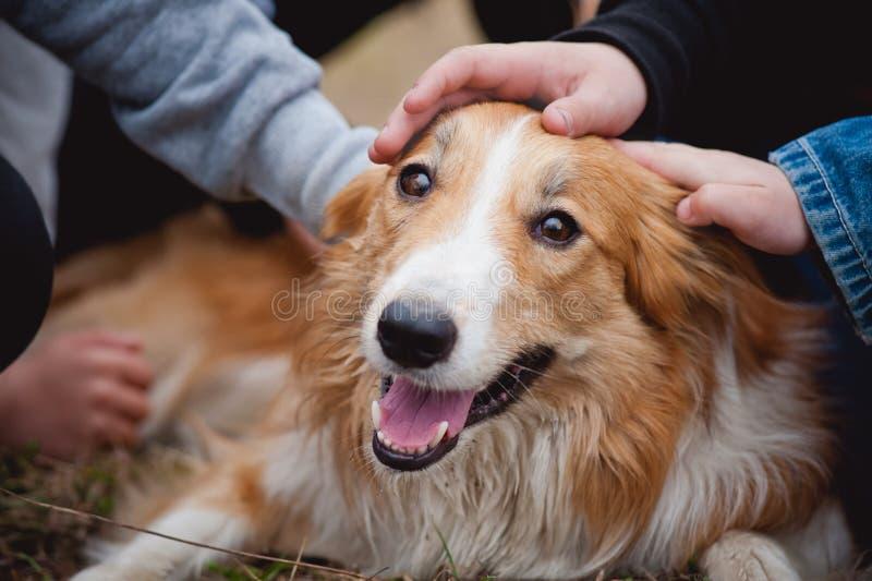 Los niños acarician el perro rojo del collie de frontera imagenes de archivo