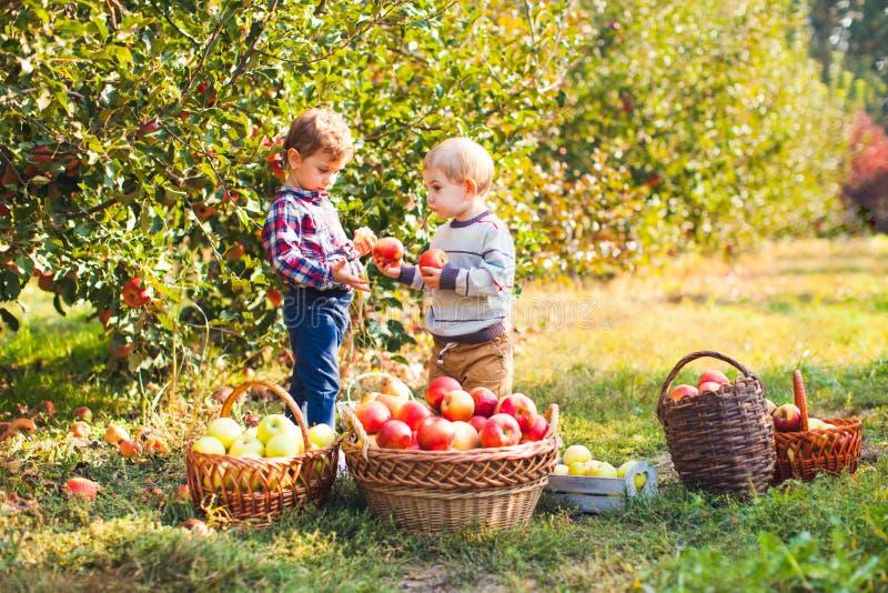 Los niños bonitos comen las frutas en la cosecha de la caída imagen de archivo